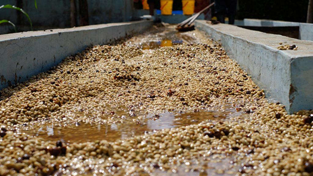 переработка кофейных зерен