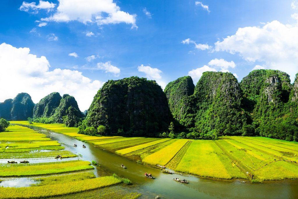 рисовые плантации Вьетнама