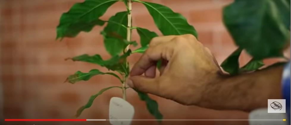 морфология растения