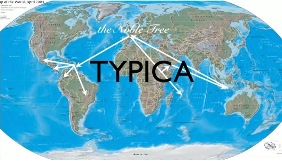 распространение Типики по миру