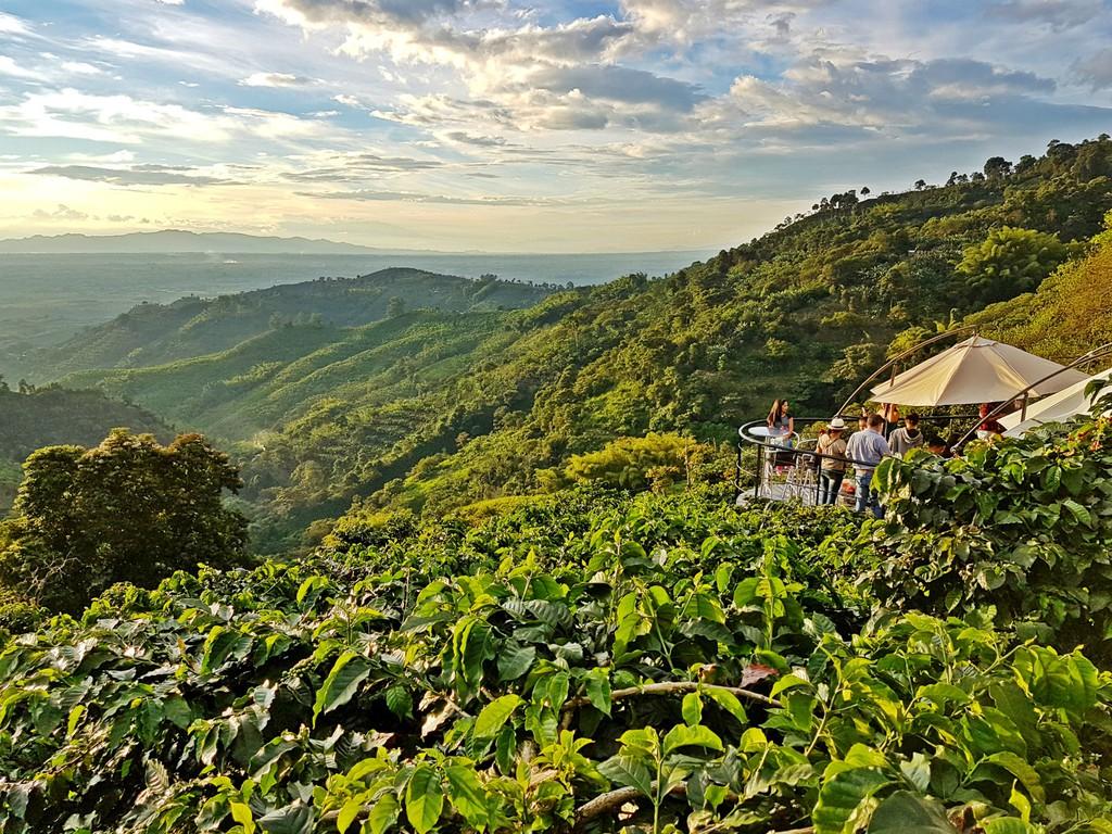 вид на плантации кофе в Колумбии