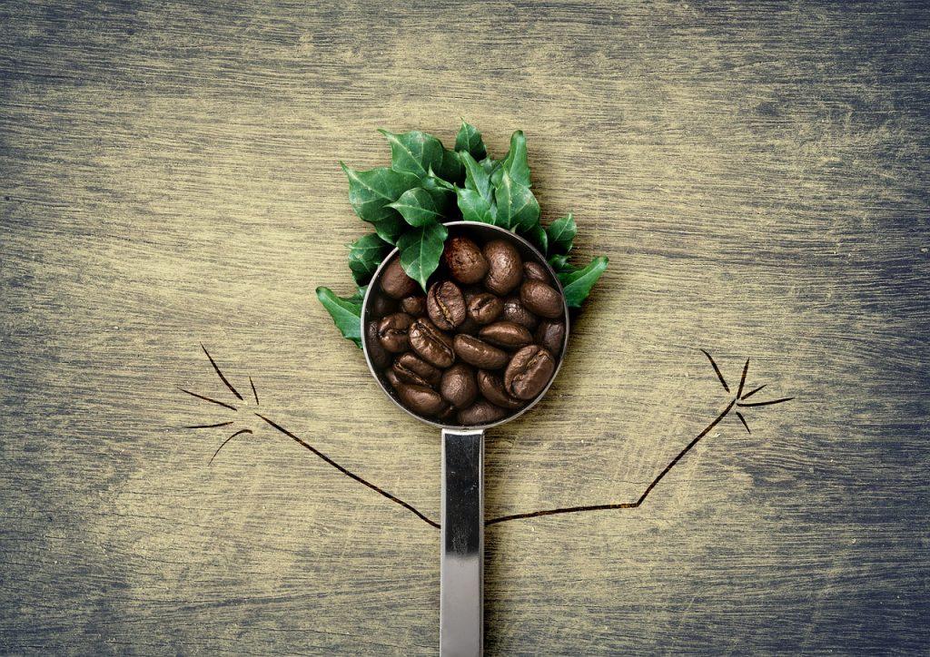 зерно кофе и лист