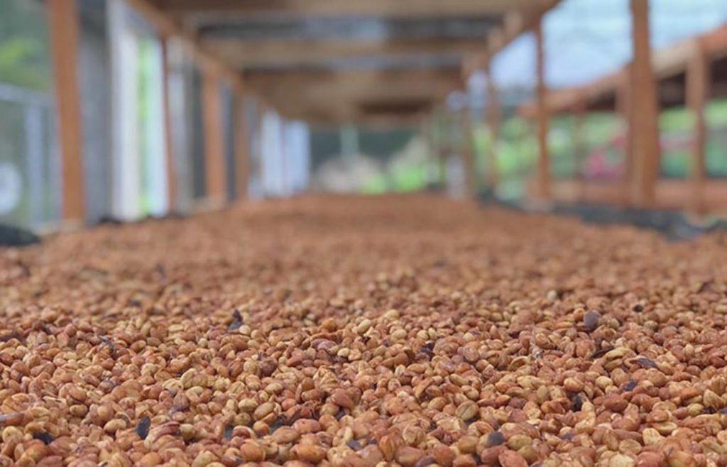 медовая обработка кофе