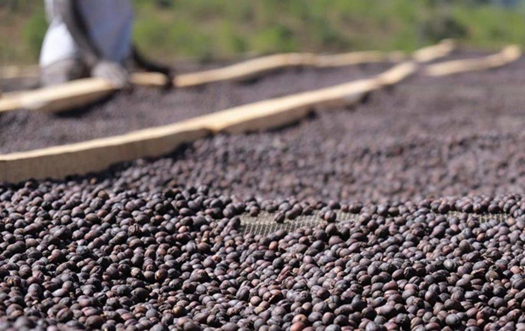 сухая обработка кофе