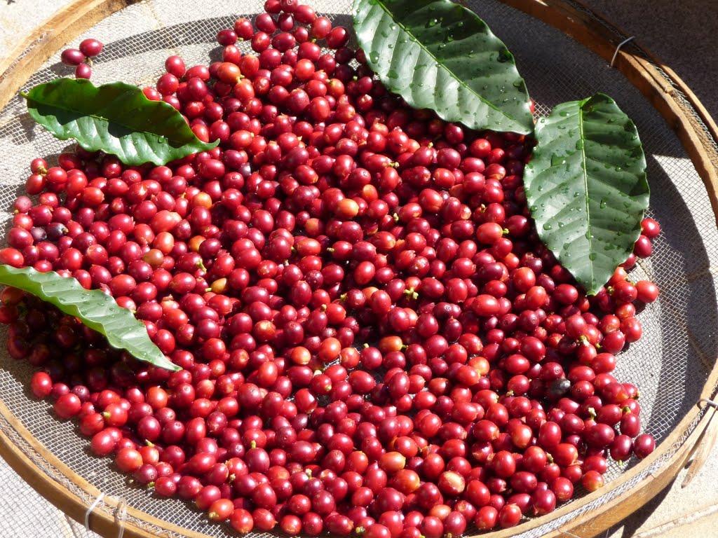 кофейная вишня