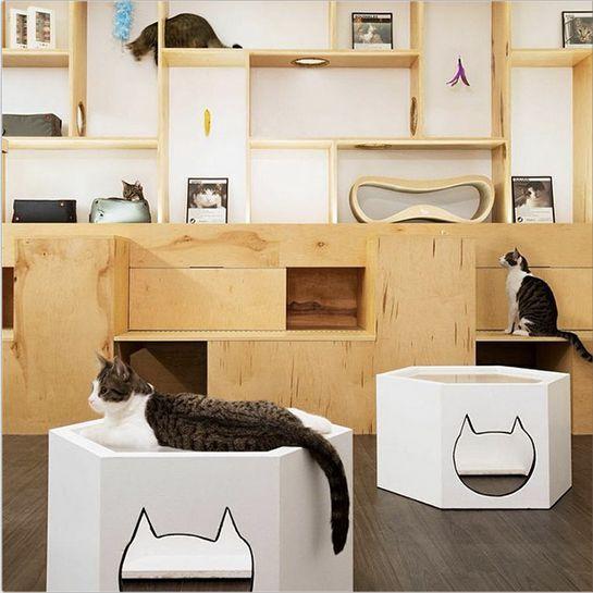 Кафе Metropolitan Cat